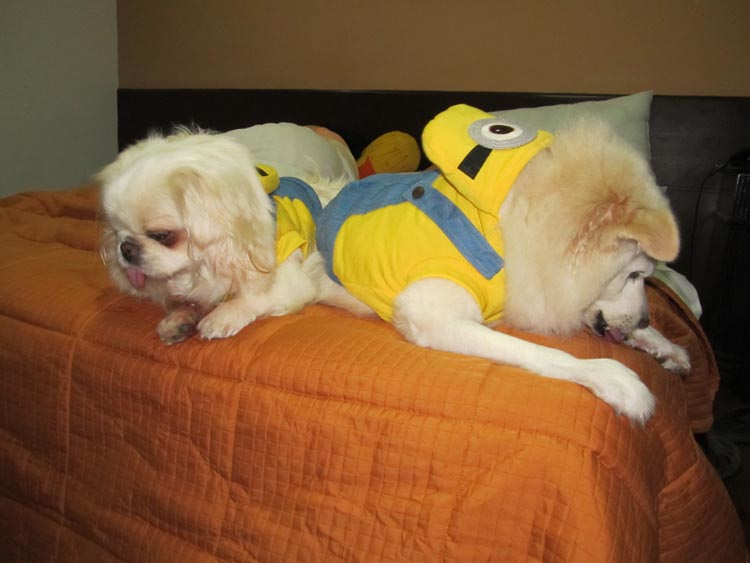 IMG_4732 minion dogs ok.JPG
