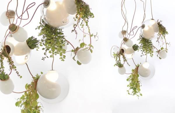 Plant Lights Dontpayfull