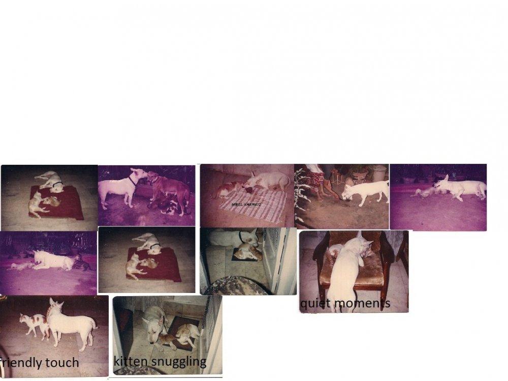 Rana the ull terrier.