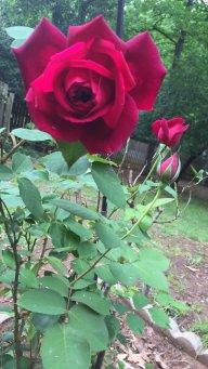 BloomingThrouhh